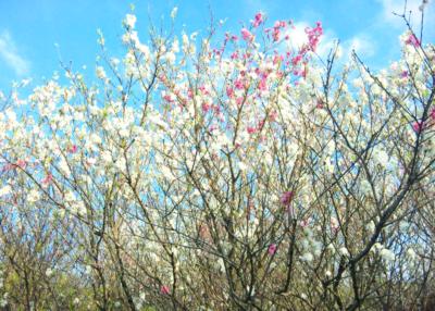 spring1.png